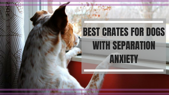 Best Crates For Dogs With Separation Anxiety