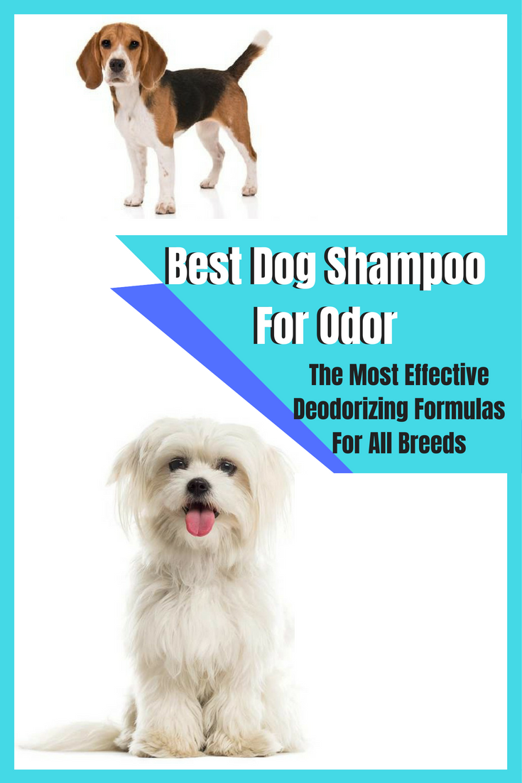 Best Dog Shampoo For Odor