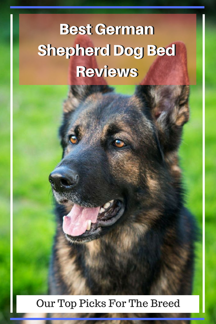 Best German Shepherd Dog Bed Reviews 2019 Our Top Picks For The