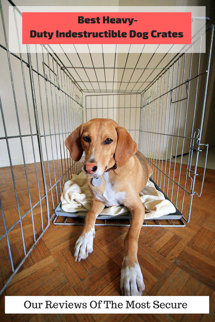 Best Heavy-Duty, Indestructible Dog Crates