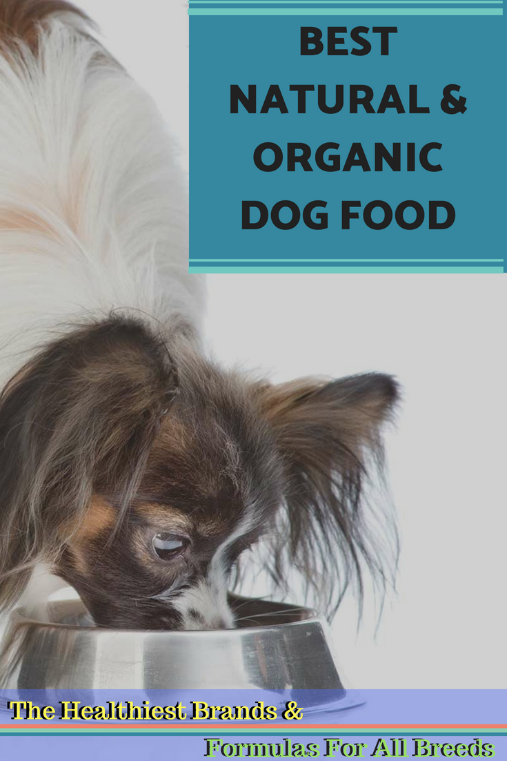 Best Natural & Organic Dog Food