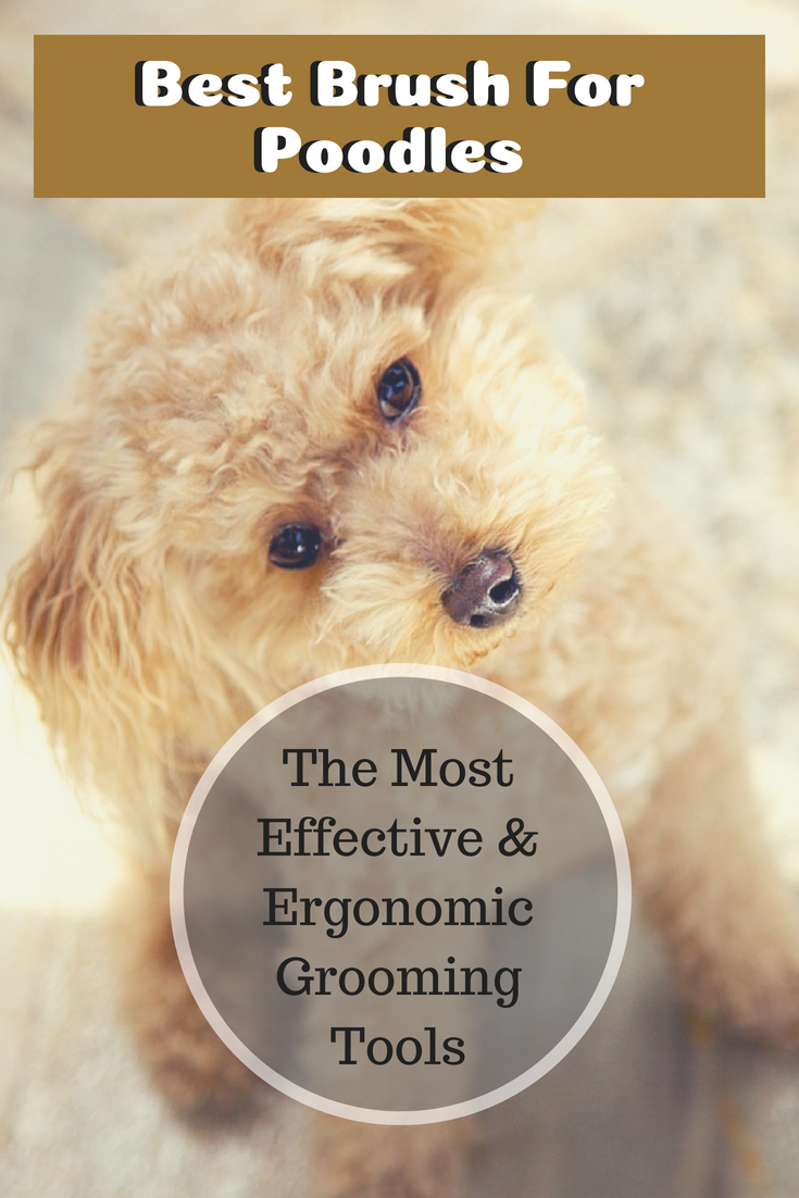 Best Brush For Poodles 2019 The Most Effective